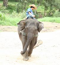 Elephant Facts and Elephant Information