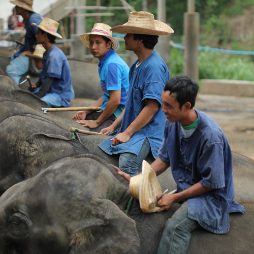 Mahout Elephant Training
